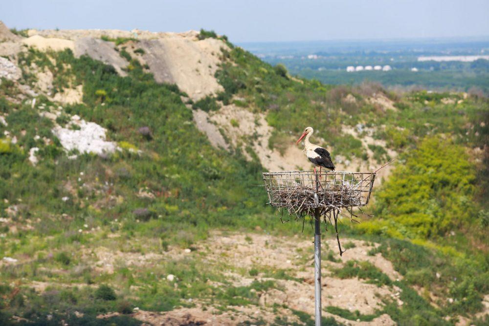 03 Uphil Platform Stork